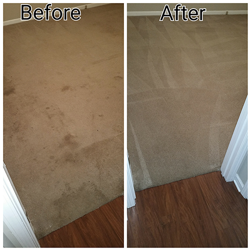 carpet pet stain removal